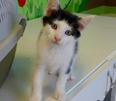 Kittens can be adopted at the shelter in our new Kitty Korner. Kittens arrive daily from loving...