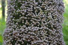 Mushrooms blooming in the tree bark