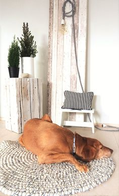 Isn't it cool that your pet chooses to rest on the best rug in the house? Pets know very well which are the best materials and pure wool is keeping them warm in autumn and cool in summer. See our collection of round rugs: http://feltballrug.com/round-rugs.html