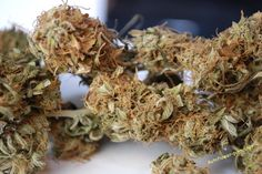 Moonstone buds - grown by lost in space (from our forum)