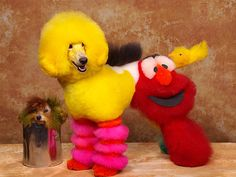 8 Miserable Dog-testants In An Extreme Dog Grooming Competition: Sesame Street Anyone?