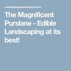 The Magnificent Purslane - Edible Landscaping at its best!