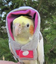 Just a cockatiel in a hoodie - Imgury      que tal , MARILU ????? O modelito ....