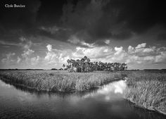 Clyde Butcher's attempt to save Florida's Everglades