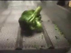 ΠΛΥΝΤΗΡΙΟ ΛΑΧΑΝΙΚΩΝ KRONEN BALKAN SEC ΣΚΟΠΕΛΙΤΗΣ Gewa 3800 plus broccoli