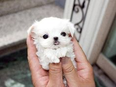 Cute Baby Dogs, Cute Little Puppies, Cute Dogs And Puppies, Baby Puppies, Cute Little Animals, Cute Funny Animals, Doggies, Baby Animals Pictures, Cute Animal Pictures