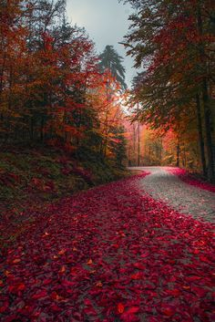 ~~Red | autumn road landscape | by Zeki Seferoglu~~