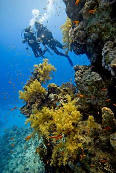 Key Largo scuba diving....this is on our list of places to go!!
