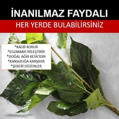 Dut Yaprağı Faydaları Natural Treatments, Herbal Remedies, Good To Know, Health Tips, Herbalism, Diy And Crafts, Health Fitness, Food And Drink, Herbs