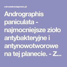 Andrographis paniculata - najmocniejsze zioło antybakteryjne i antynowotworowe na tej planecie. - Zdrowiebeztajemnic.pl Remedies, Homemade, Healthy, Wellness, Herbalism, Home Made, Health, Diy
