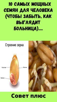 pierderi în greutate olly smoothie recenzii)