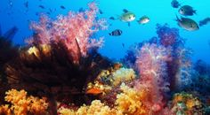 Snorkeling in Australia's Barrier Reef #travel
