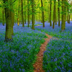 The forest for the flowers.