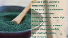 Los beneficios del alga espirulina para adelgazar