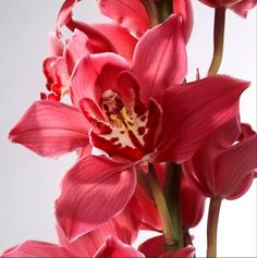 Exquisite! ~ Red orchids