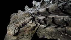 Het lijkt wel een rekwisiet uit Game of Thrones: het fossiel van een 110 miljoen jaar oude dinosaurus dat grotendeels intact werd teruggevonden.