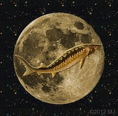 Tarot Girl: August Full Moon - Sturgeon And Blue