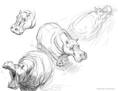 Class Handout_Hippos by davidsdoodles on DeviantArt Animal Sketches, Animal Drawings, Drawing Sketches, Art Drawings, Sketching, Hippo Drawing, Gesture Drawing, Art Du Croquis, Nature Sketch