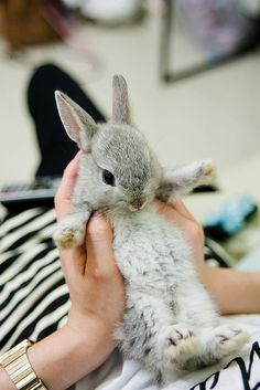 Too cute!! I want to have a pet bunny soooo bad!