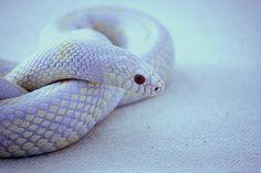pretty snake :)