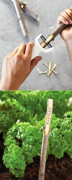 peel off the bark with a veggie peeler to make DIY Branch garden markers ... this could be great for other stick-based projects ... secret messages on a nature walk?