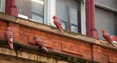 Ceramic Birds are dotted all around the Northern Quarter - Look up!