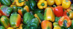 Alle Vitamine auf einen Blick (Foto von: © jodofe/photocase.de  )