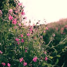 The hedgerows are blooming beautiful at this time of year.