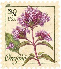 2011, Herbs: Oregano (Origanum)