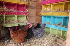 Chicken coop with a chandelier   Cluckingham!!!