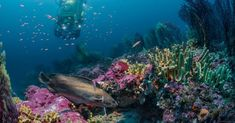 Another Earth, National Geographic Photography, Deep Water, Large Animals, Second World, South Of France, Snorkeling, Under The Sea, Habitats