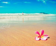 Plumeria on a Hawaiian beach...