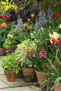 Garden in pots for patio