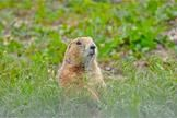 Dogs to Prairie Dogs, Animals Need Rescue from Disaster (Op-Ed) http://www.livescience.com/39774-animals-need-rescue-from-disaster.html