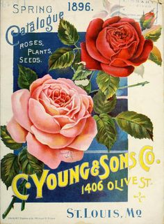 Spring catalogue : roses, plants, seeds