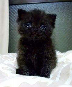 awww. I love kitties. just look at those eyes. <3