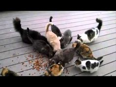 lol .  .  .  this is why you do NOT feed the neighbors cats.