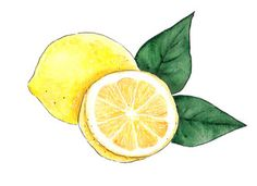 Watercolor yellow lemon food isolated on a white background illustration. Drawn creative graphic design element. , #Ad, #food, #isolated, #white, #Watercolor, #yellow #Ad