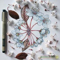 Картинки по запросу весенние цветы рисунок