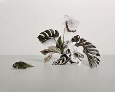 All Artwork — Anna Church Anna, Photography Collage, Collage Art, Collage Sculpture, Photosynthesis, Buy Art, Floral Arrangements, Paper Art, Saatchi Art