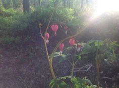 My Beautiful Garden Cool Photos, My Photos, Amazing Flowers, Beautiful Gardens, I Am Awesome, Fun, Photography, Painting, Photograph