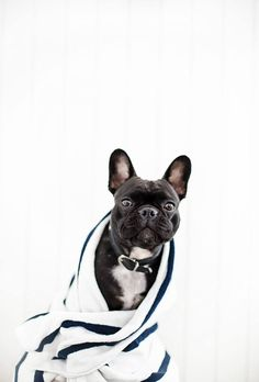 Life With A French Bulldog