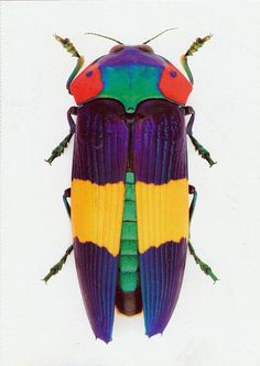Mücevher Böceği http://dusuneninsanlaricin.com/gorunce-sizi-hayrete-dusurecek-en-suslu-en-ilginc-52-canli/