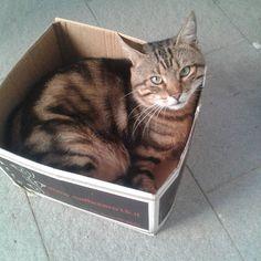 #buongiorno dal #gatto #goodmorning #cat