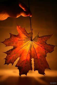 Wow!  I do love fall leaves!  What an interesting and creative way to highlight the color of a perfect specimen.