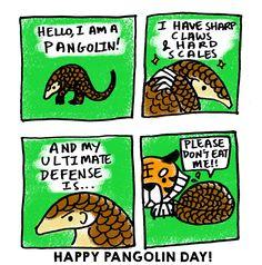 Sunda pangolin | BES Drongos| Follow that monkey!