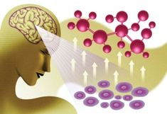 Thought-Controlled Genes Could Someday Help Us Heal   A team of bioengineers in Switzerland has taken the first step toward this cyborglike setup by combining a brain-computer interface with a synthetic biological implant, allowing a genetic switch to be operated by brain activity. It is the world's first brain-gene interface... [Neurotechnology: http://futuristicnews.com/tag/brain/ Brain-Computer Interfaces: http://futuristicshop.com/category/neuroscience-books-neurotechnology-books/ Mind…