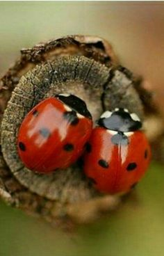 Sweet little friends. Beautiful Bugs, Amazing Nature, Beautiful Images, Animals And Pets, Baby Animals, Cute Animals, Beautiful Creatures, Animals Beautiful, A Bug's Life