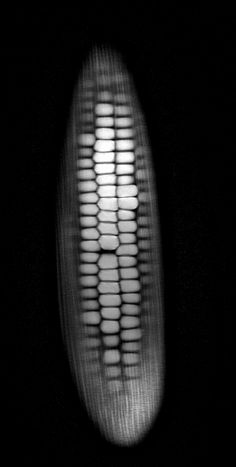 "What do fruits and vegetables look like inside an MRI? Short answer: ""Whoa.""    corn"