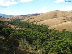 https://flic.kr/p/KKDCxK | Floresta com araucárias no Parque Estadual da Serra do Papagaio, Baependi, MG, Brasil | Araucaria angustifolia (Bertol.) Kuntze (Araucariaceae)